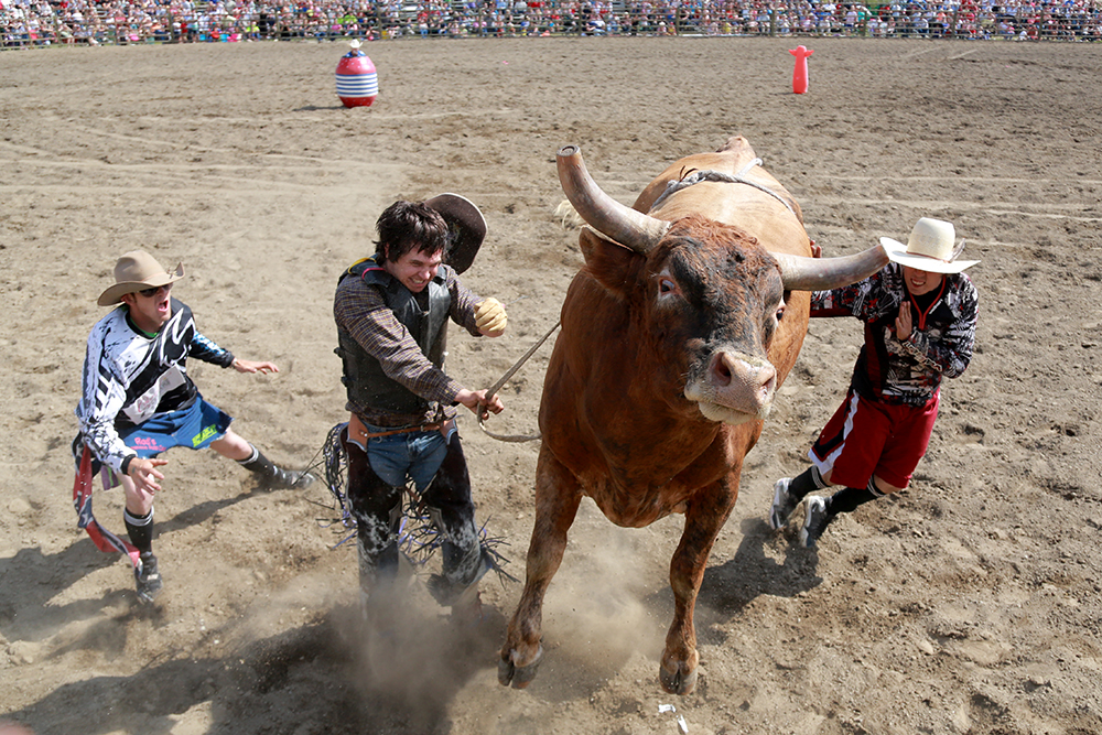 Chance Shrader winces as he is bucked off a bull on July 4, 2013 at the Sedro-Woolley Rodeo. Despite the violent nature of bull riding, Shrader says he has no fear of the sport. Brooke Warren / Skagit Valley Herald