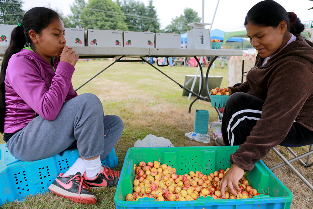 Nancy Lozano (left) sits with her mother, Maria Garcia, as she packs flats with cherries at the Lozano Farm boot at the Bow Little Market on Aug. 8, 2013 in Bow, Wash. Brooke Warren / Skagit Valley Herald