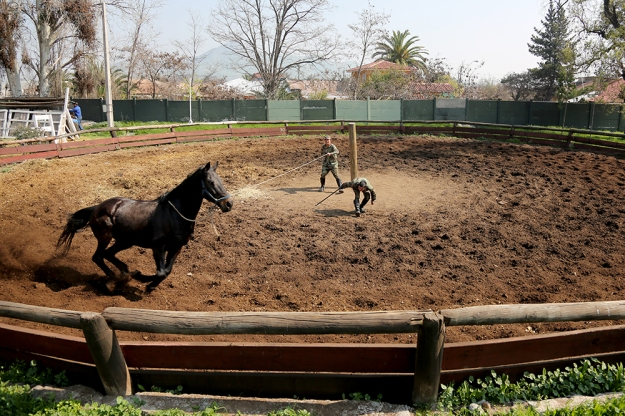 Soldiers Jesús Cordero and Adrian Mallea train Panteon the horse on August 24, 2013 at Campo Militar San Bernardo in Santiago, Chile.