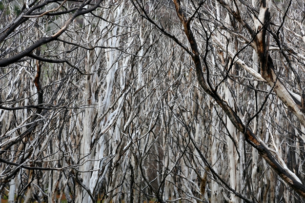 Tree skeletons from a forest fire in 2011 spread across the landscape in Torres del Paine National Park in Patagonia, Chile. The fierce and constant wind in the area makes any fire a potential hazard.