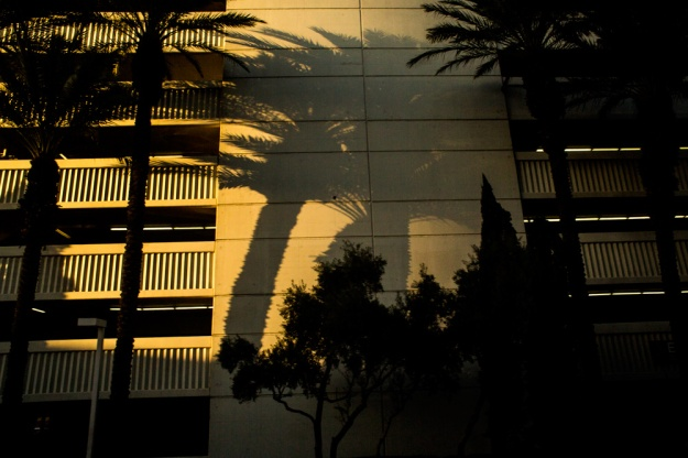 Palm trees cast shadows on a building in Las Vegas, Nev.